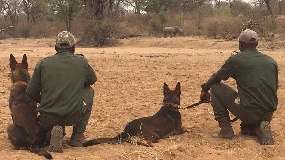 Dogs Po and Rogue with rangers and a rhino