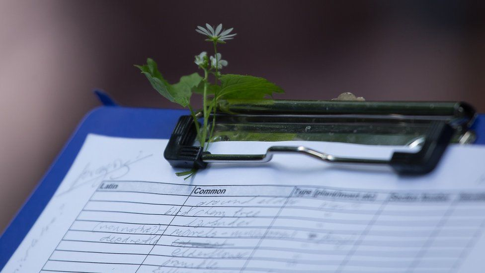 Plant and a record sheet