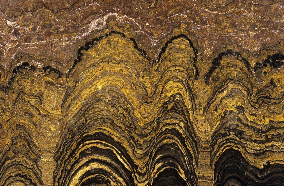 Fosilleşmiş stromatolit