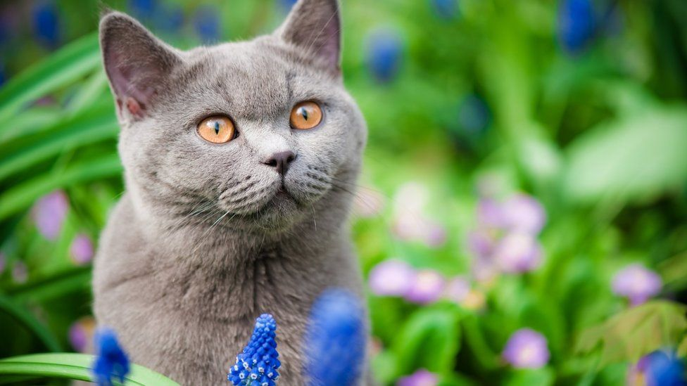 Stock image of a cat outside in flower bed