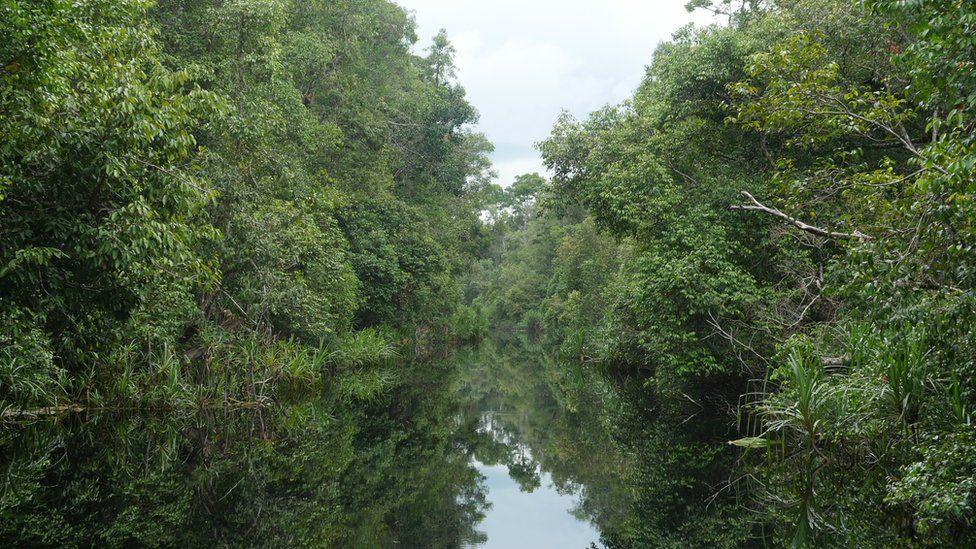 Afon Sakonyar, Canolbarth Kalimantan. Afon sydd wedi ei wneud i gyd o ddŵr glaw, ac yn nodweddiadol gan fod y dŵr yn ddu oherwydd y tir mawnog (peat). Yr enw gwreiddiol oedd 'Suangai Buaya', afon y crocodeil - cyn i'r Iseldirwyr, a oedd yn coloneiddio Indonesia tan yr Ail Ryfel Byd, ei hail enwi