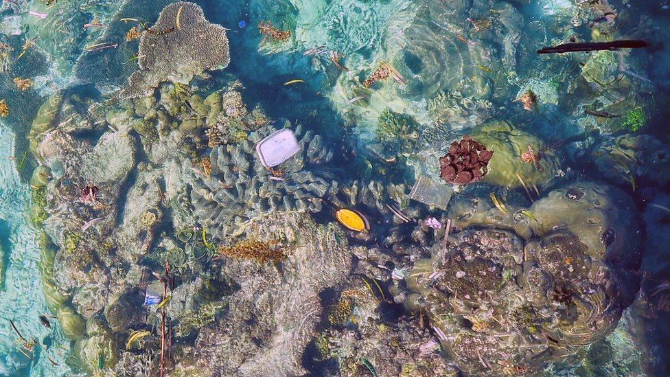 Plastic floating over corals