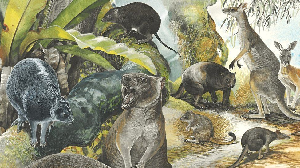 Reconstruction of ancient tree-climbing kangaroo (left)