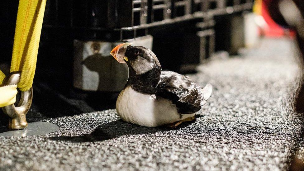 puffin on the deck of the research vessel