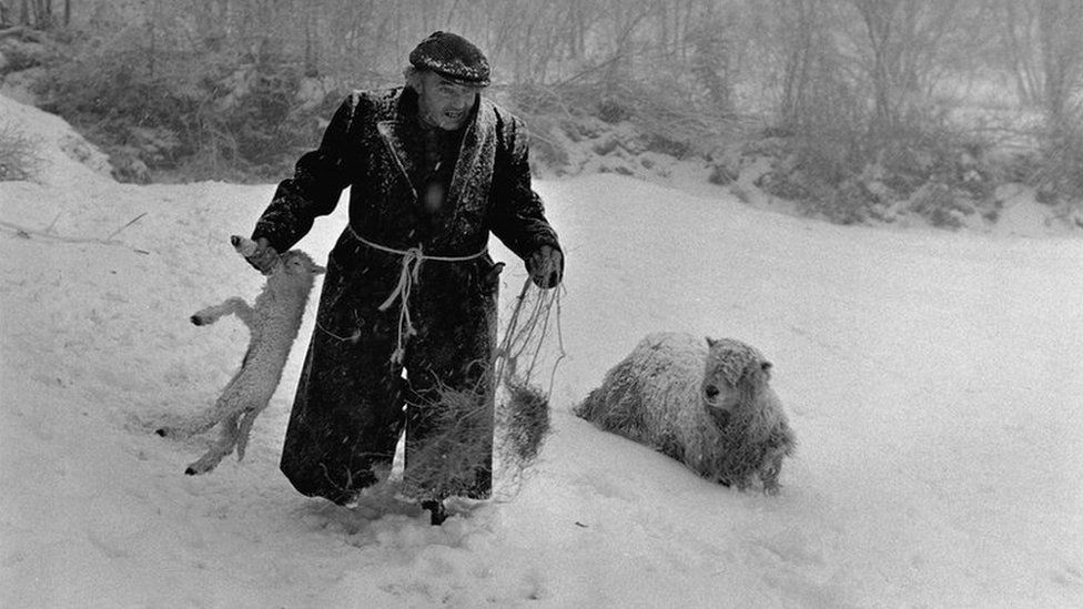 Ivor Brock rescuing a lamb in the snow in Millhams Dolton in February 1978