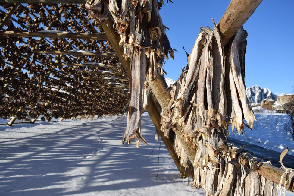 Stockfish, hung from a rack