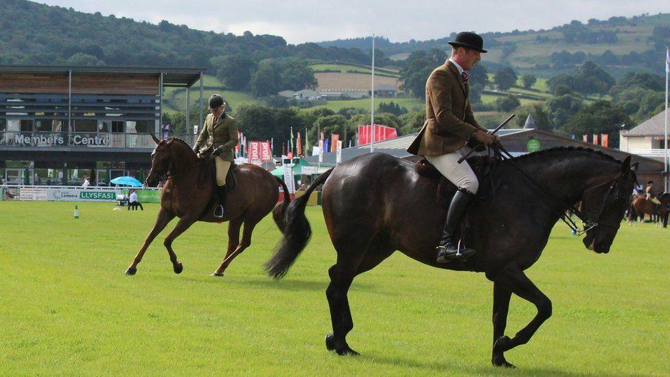 Y ceffylau ar eu gorau // The horses have got a spring in their step