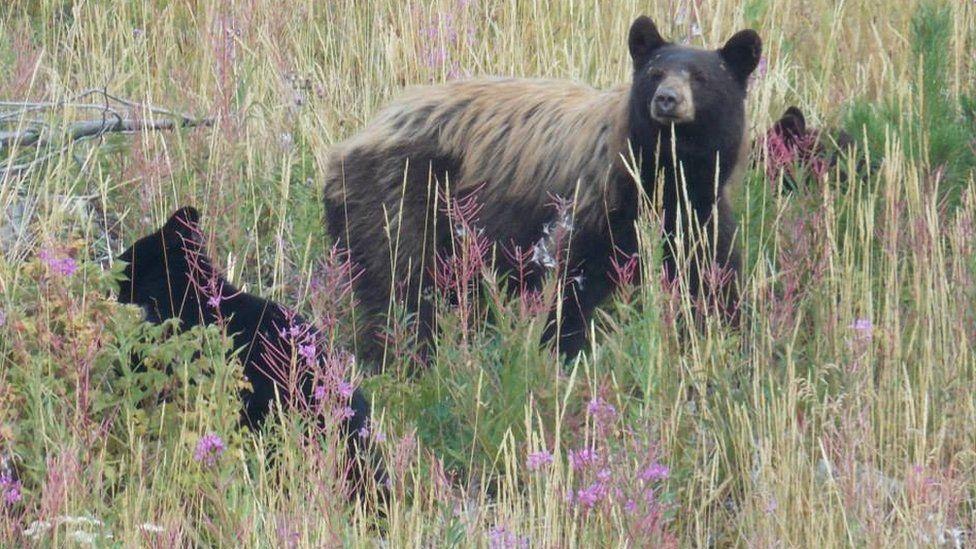 Jordan Carbery photo of bear