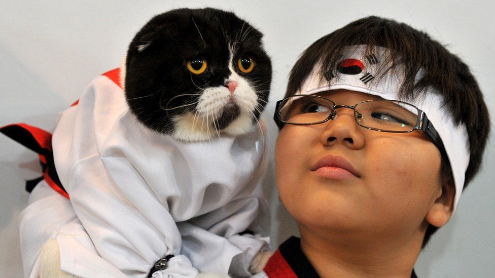 A boy and his Scottish Fold cat dressed in a hanbok costume attend a cat exhibition in Bishkek on October 20, 2013.