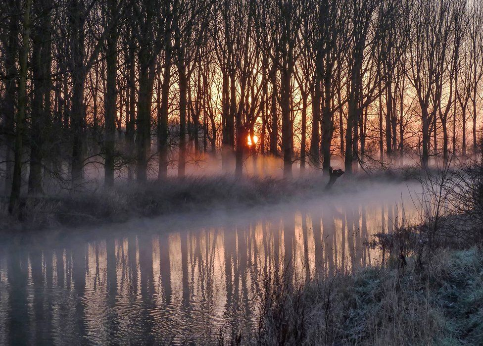 A forest and river with mist along the floor
