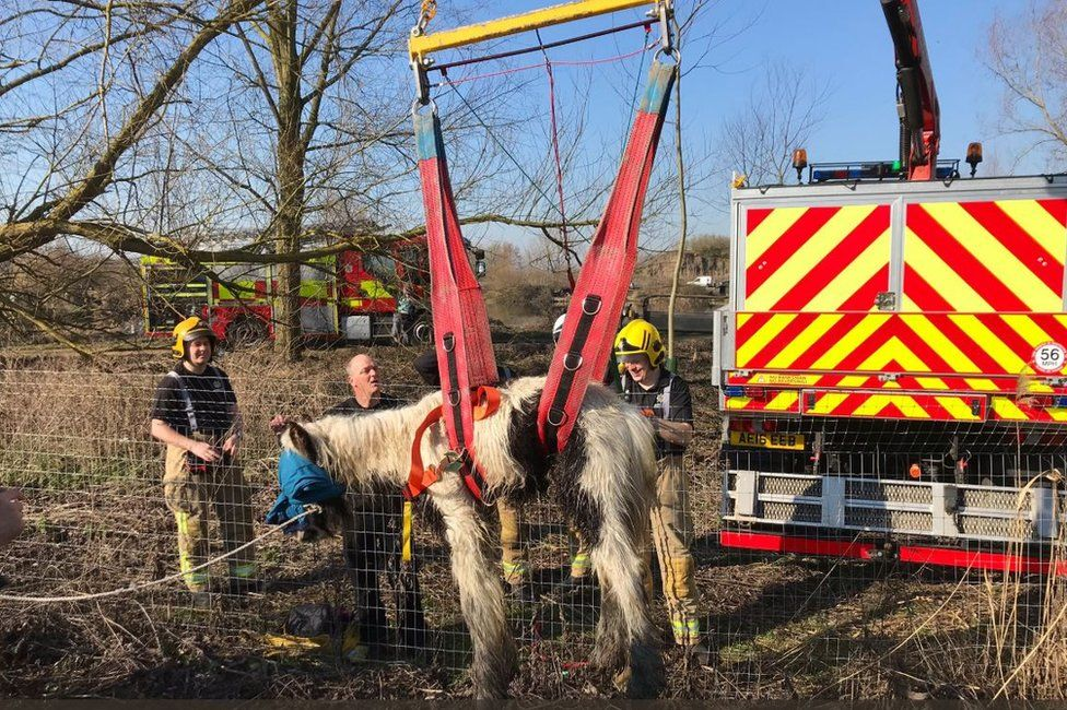Horse being lifted by winch