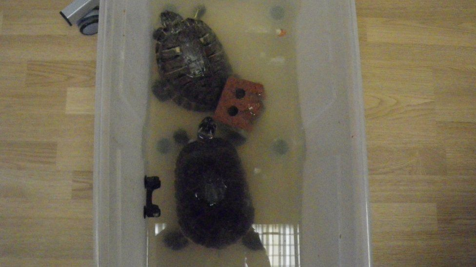 The RSPCA rescued two terrapins which were not being cared for properly