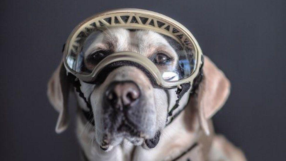 Frida, uno de los perros de la Marina.