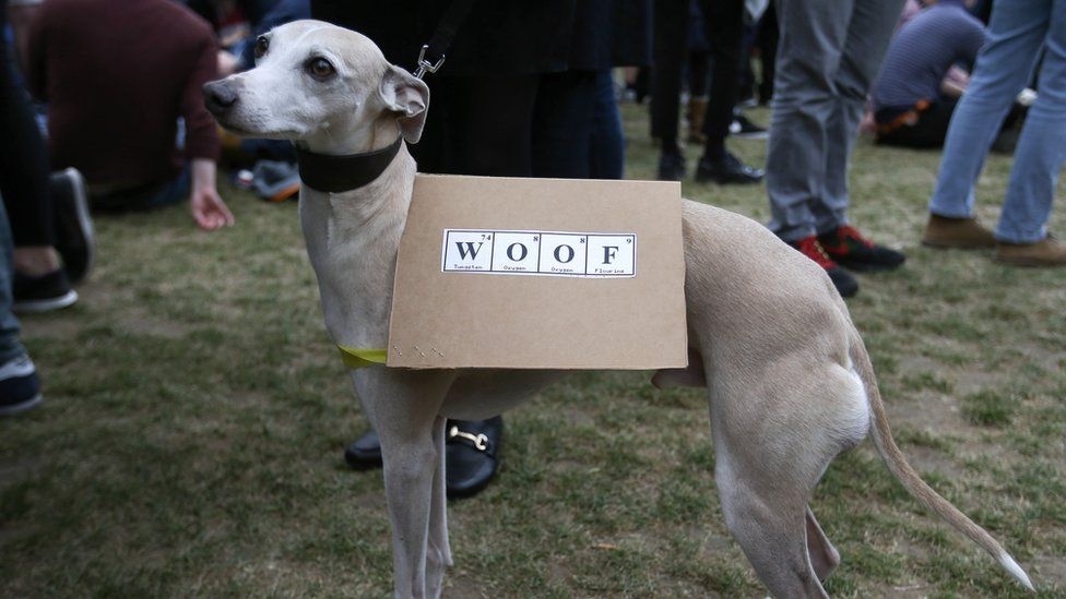 A dog wearing a banner at the protests