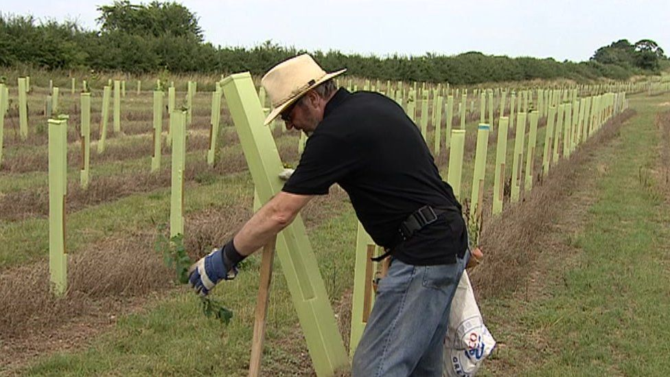 David Harding planting a tree at his site Avon Wood
