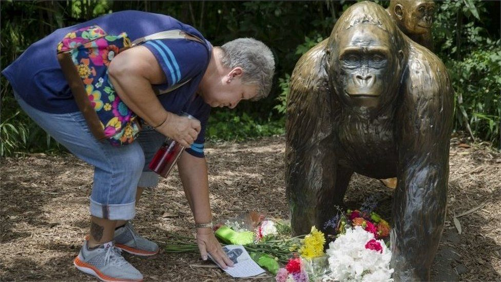 A woman touches a sympathy card beside a gorilla statue outside the Gorilla World display at the Cincinnati Zoo (29 May 2016)