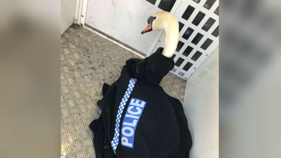 Swan wearing a police jacket