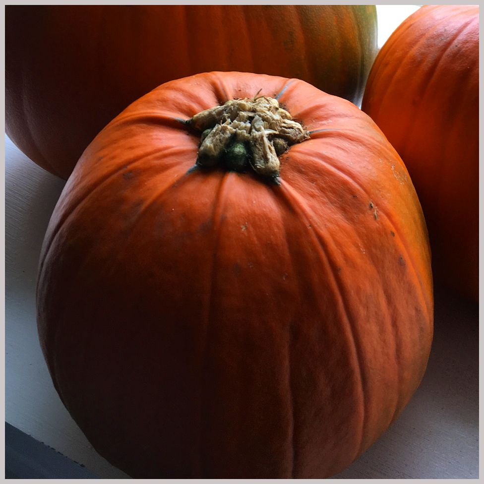 Eliza's pumpkins