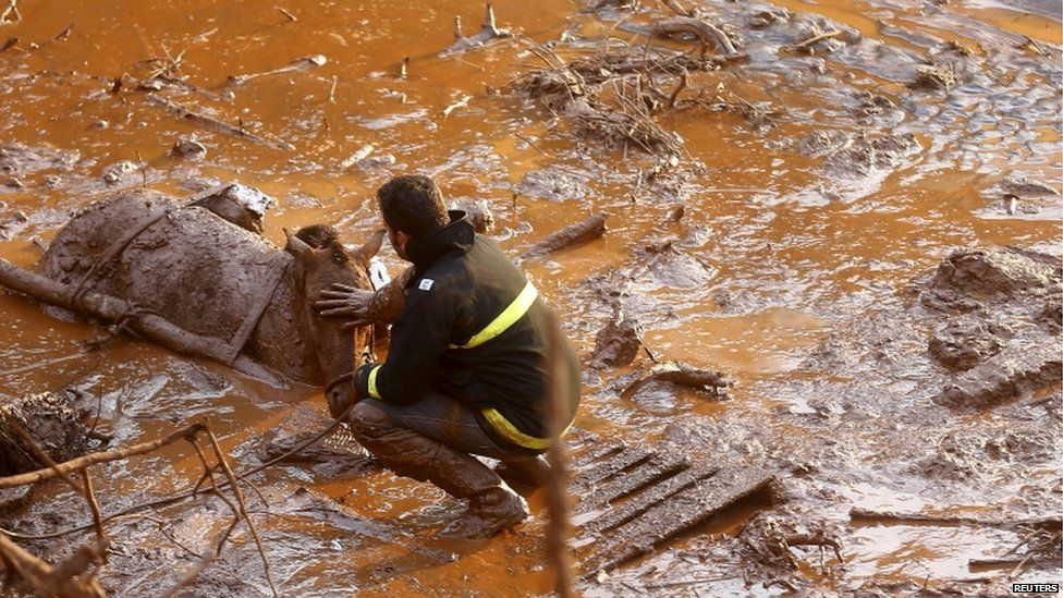 A rescue worker in Bento Rodrigues touches the head of a horse he is trying to save