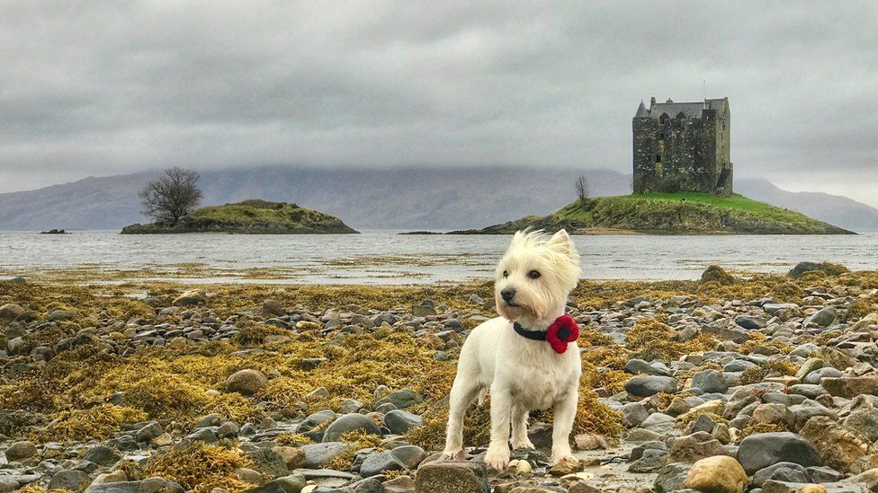 A west highland terrier in Edinburgh