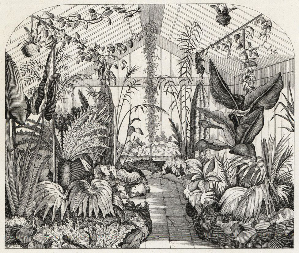 The interior of Nathaniel Ward's fern greenhouse, London, 1851