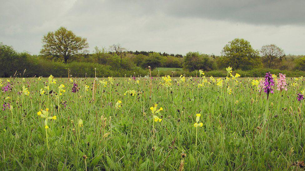 Berndown Meadow