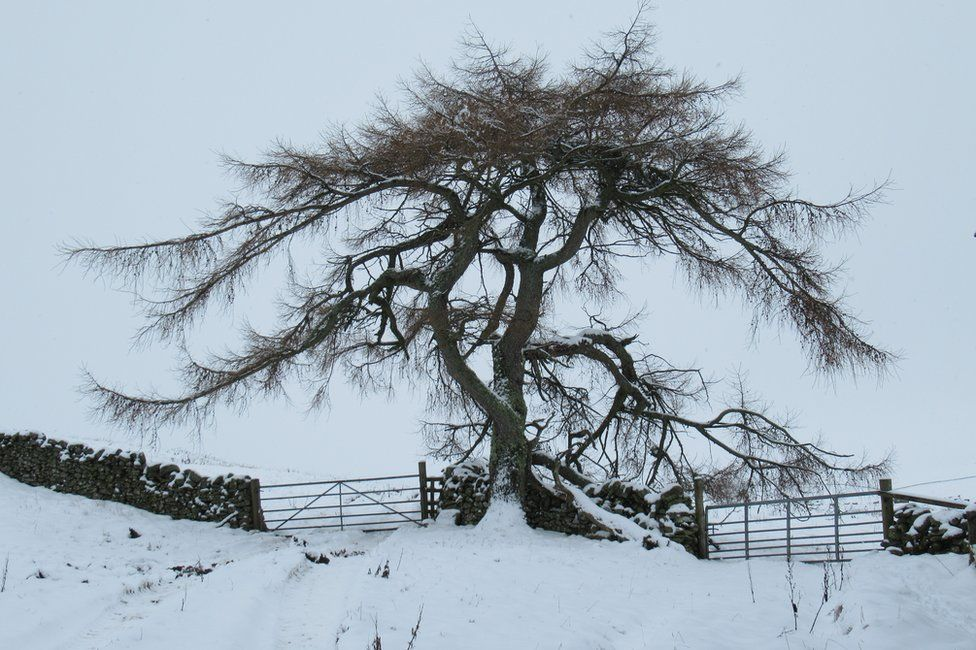 Tree in Stow just outside Galashiels in the Scottish Borders