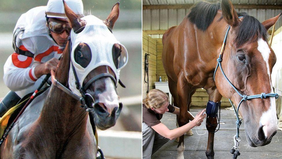 El caballo que salvó su vida aprendiendo a pintar