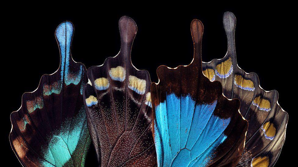 Qué es Teslagram, el innovador método inspirado en las alas de mariposa que quiere revolucionar la seguridad de las tarjetas bancarias