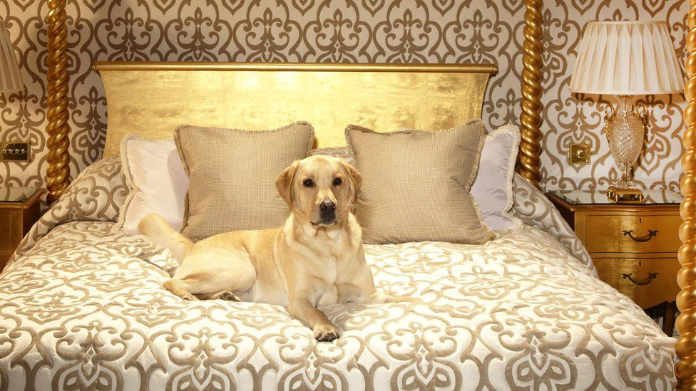 A dog enjoying its stay at the Milestone Hotel in London