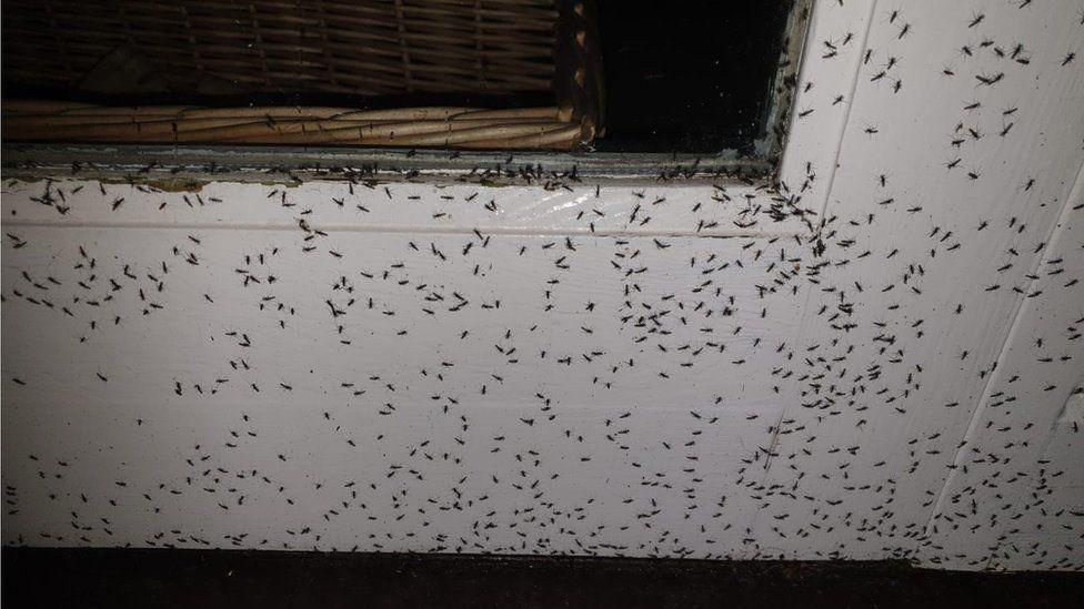 Flies on a door