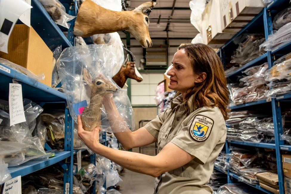 Inside America's Aladdin's cave of dead animals