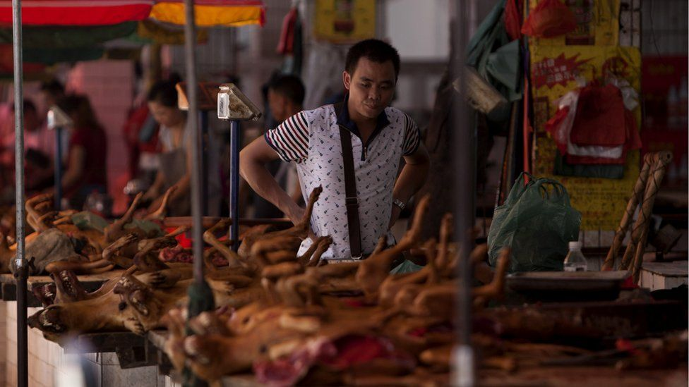 Dogs on sale at the 2015 Yulin festival