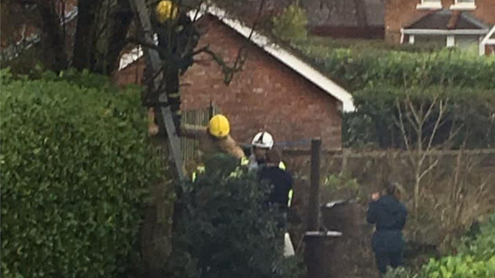 Firefighters use a ladder to rescue the cat and its owner from a tree