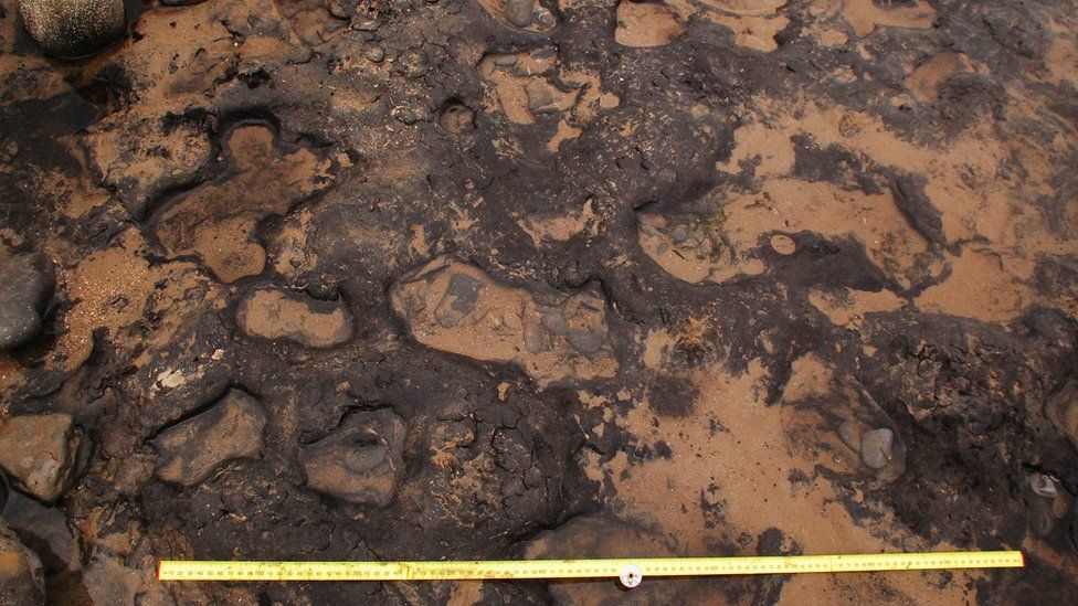 Mesolithic footprints found on Gower beach