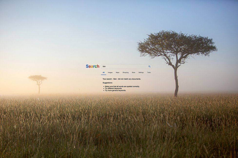 """An abstract image of a Google screen giving no results to a search for """"lion"""", superimposed on to the background of an African landscape"""