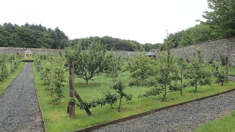 Orchard in Dumfries and Galloway