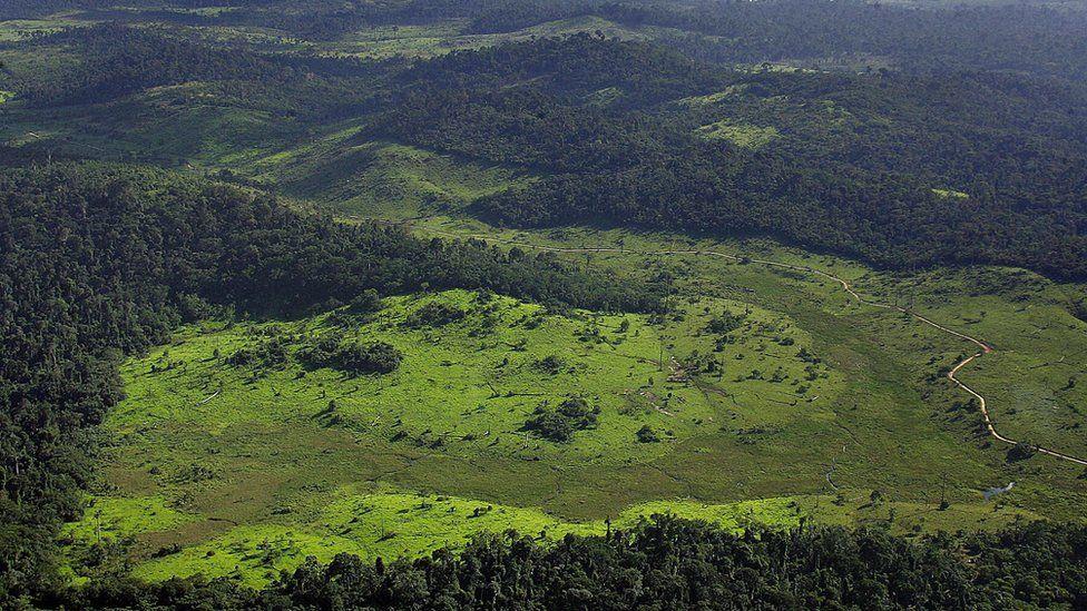 Governo norueguês confirma bloqueio de doações para preservação da Amazônia
