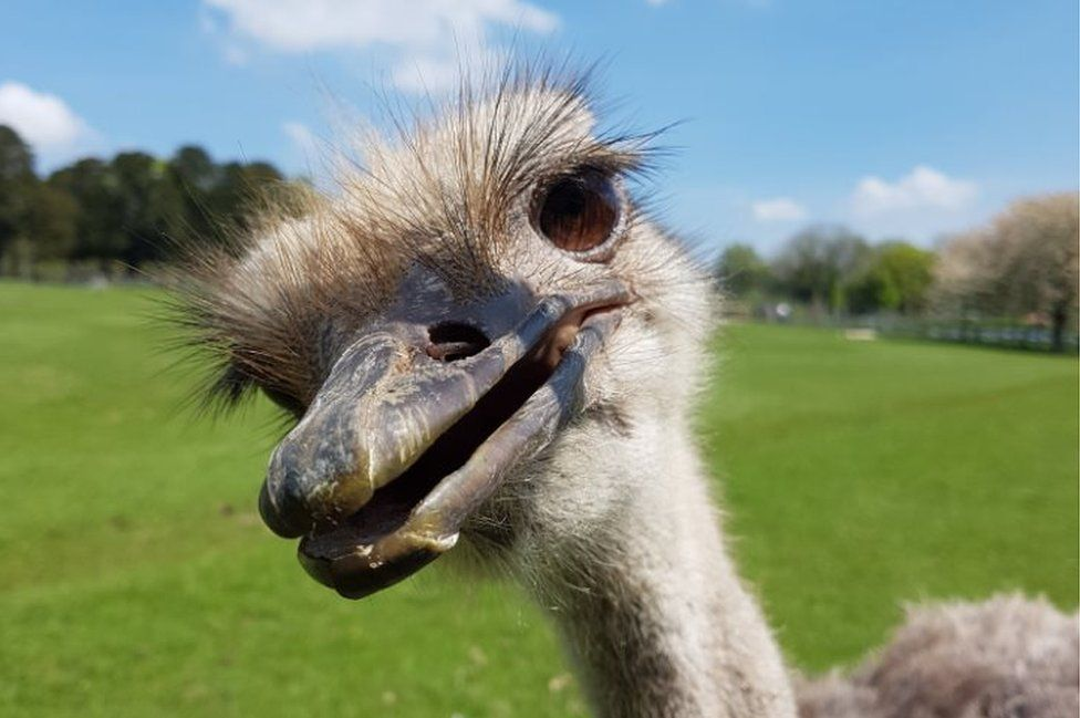 Ostrich at the zoo