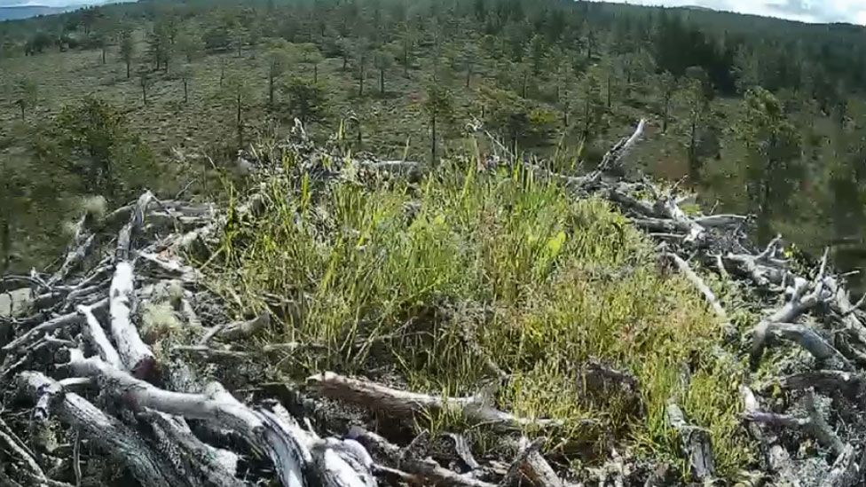 EJ's nest