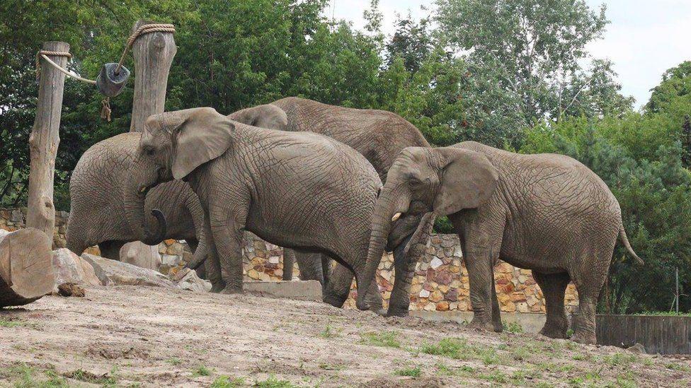 Elephants at Warsaw Zoo