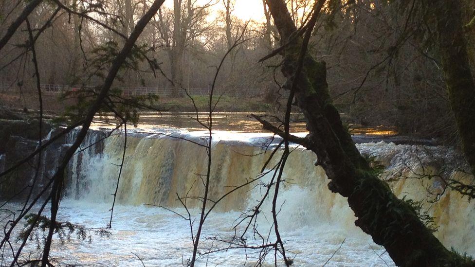 Linn Park Falls