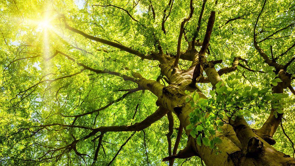 Três benefícios desconhecidos de viver perto de uma árvore