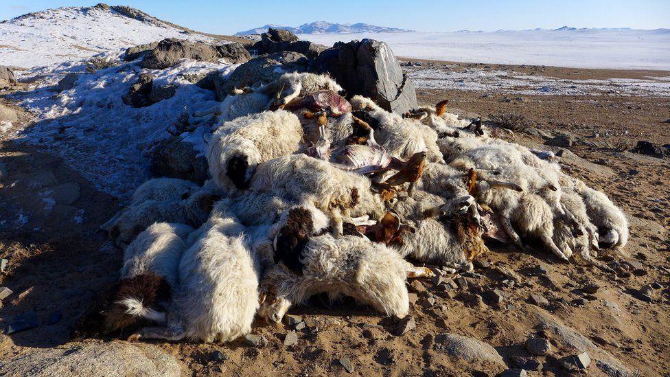 A pile of carcases on a snowy plain