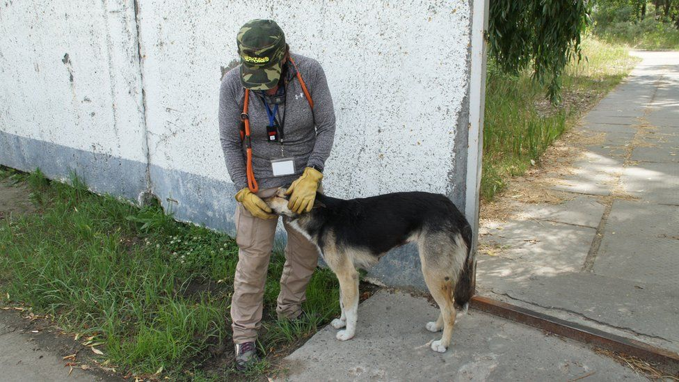 Волонтерка з собакою