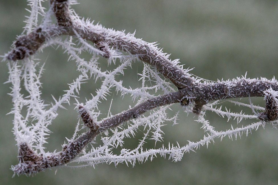 Ice crystals on a tree