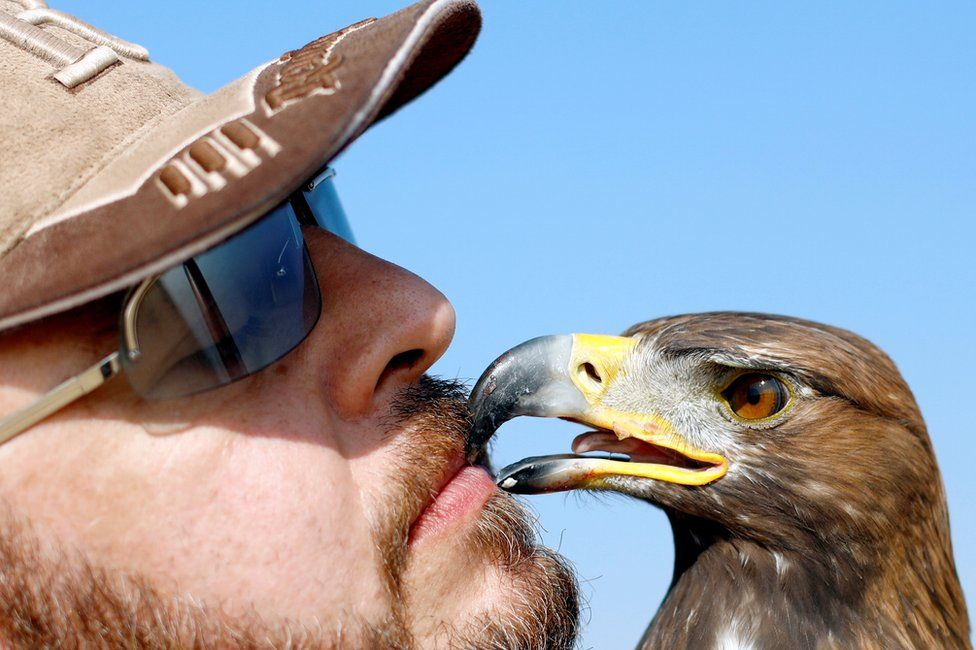 Yasser al-Khawanky feeds his hunting Golden eagle during a celebration by Egyptian clubs and austringers on World Falconry Day at Borg al-Arab desert in Alexandria, Egypt, November 17, 2018