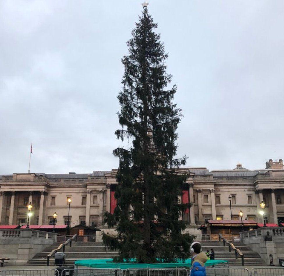 trafalgar square christmas tree - photo #37