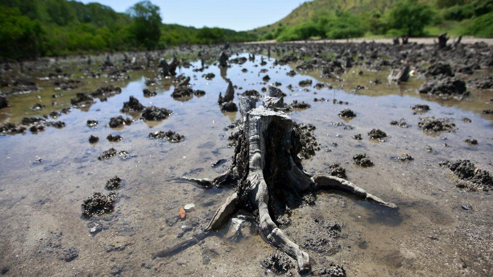 Cut mangroves in East Timor (Image: United Nations Photos)