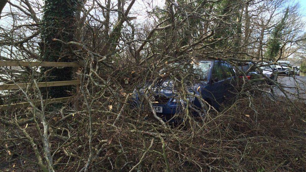 Fallen tree over a car in Salcombe